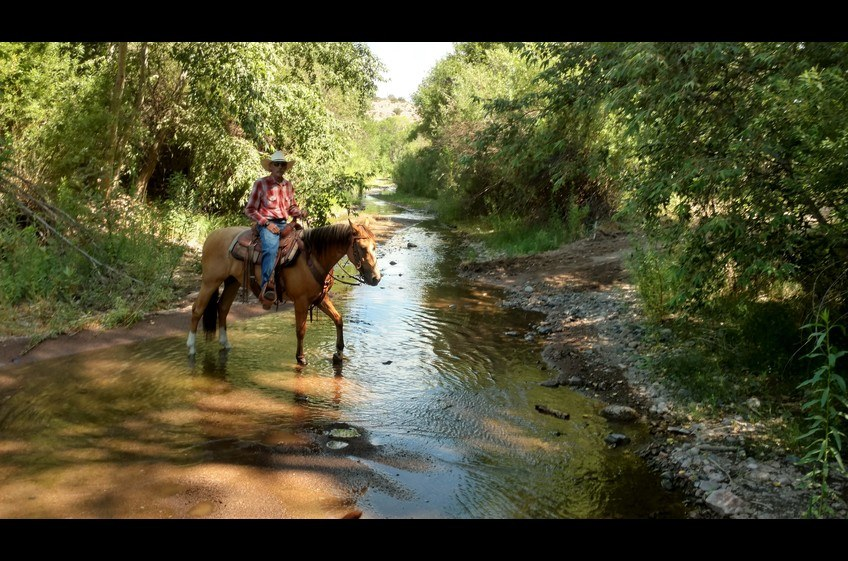A Variety of Terrain Challenges Horseback Riders at New Mexico Cabin Rentals