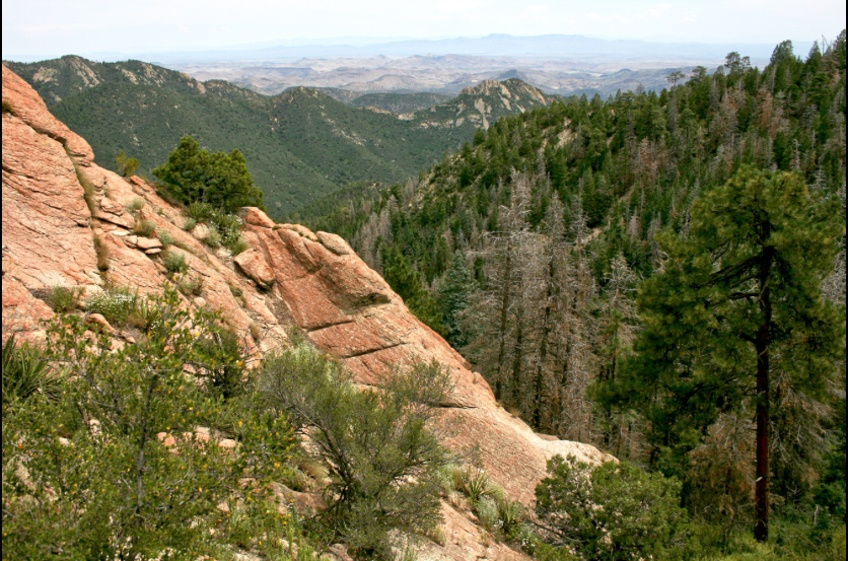 Black Range Crest Trail Near New Mexico Cabin Rentals